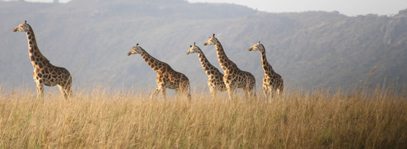 4 days kidepo wildlife safari