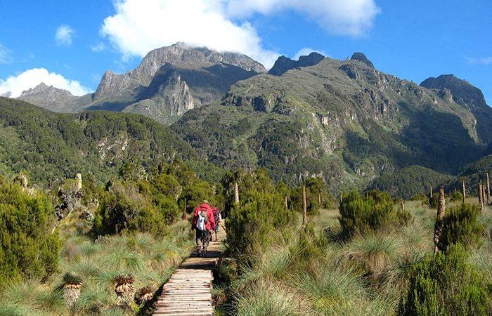 10 days rwenzori mountain trekking
