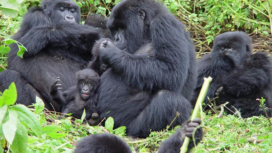 3 Days Budget Rwanda Gorilla Safari