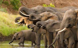 3 Days Budget Rwanda Wildlife Safari