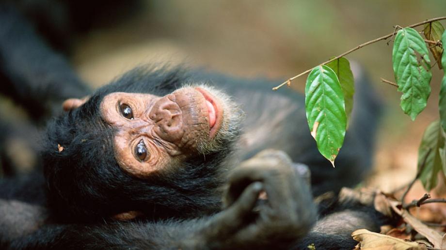3 Days Uganda Budget Chimpanzee Trekking Safari