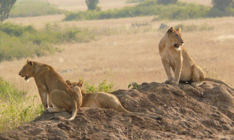 3 Days budget Murchison Falls safari