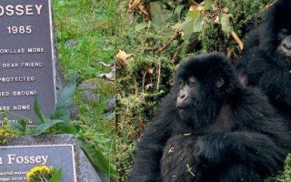 4 Days Rwanda Gorilla Safari and Dian Fossey Hike