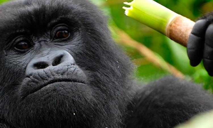 5 Days Uganda Budget Gorilla and Wildlife Safari