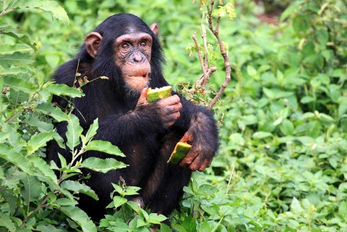 8 Days Uganda primates and wildlife safari