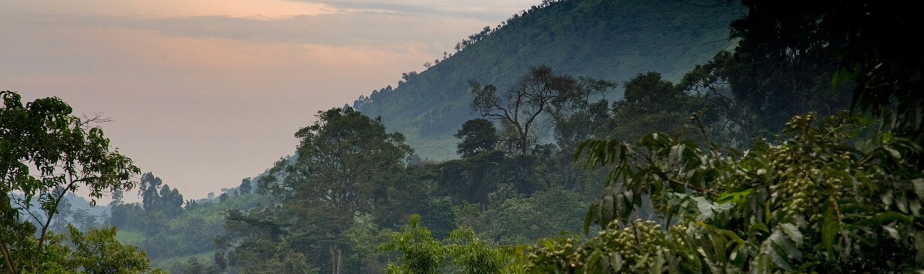 bwindi cheap safari