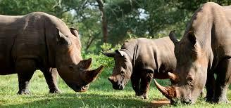 1 Day Ziwa Rhino Sanctuary tour