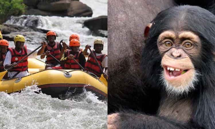 10 Days Water rafting and Primates safari