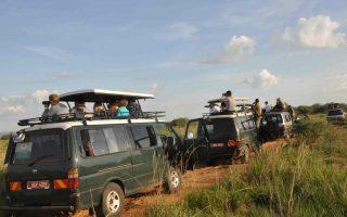 Budget Safaris to Uganda