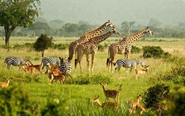 18 Days Uganda safaris