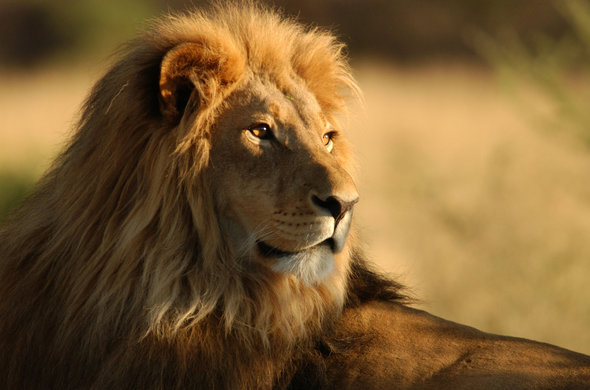 13 Days Uganda Budget Safari