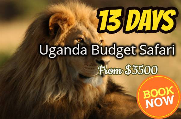 13 Days Uganda Budget Safaris