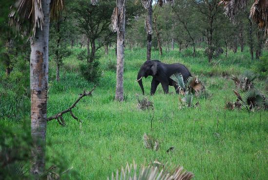 Semuliki Game Reserve