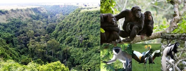 Kyambura Wildlife Reserve