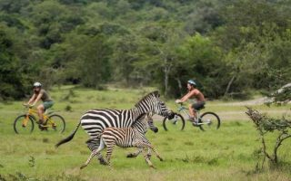 9 Best done activities in Lake Mburo National Park