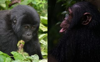 6 Days Uganda Primates Tour