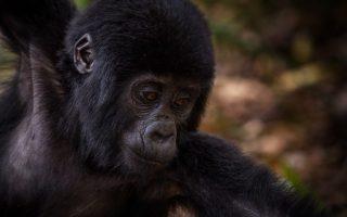 Uganda Primates Watching