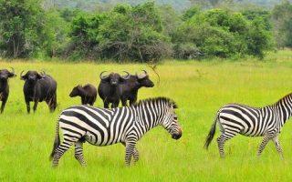 6 Days Lake Mburo & Bwindi Gorilla Trekking Safari