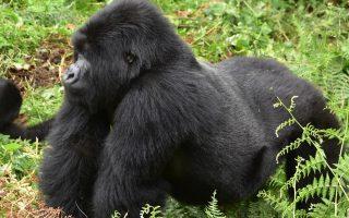 3 Days Nkuringo Gorilla Trekking with Lake Mutanda Safari