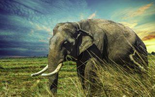 12 Days Best of Uganda Safari Tour
