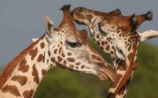 6 Days Uganda Kenya Wildlife Safari