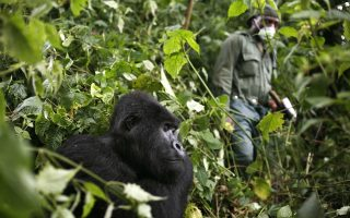 SOP's to contain Covid 19 in Uganda's Protected Areas