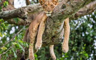 Uganda Top Wild Animals to see