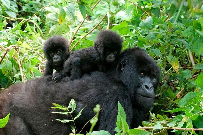 Best national parks in Uganda for safari