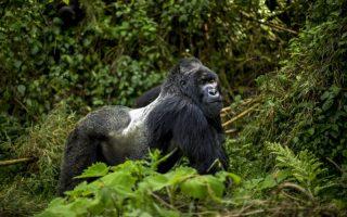 5 Days Rwanda Luxury Double Gorilla trekking safari