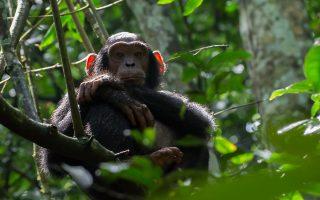 10 Days Uganda Primates & Wildlife Safari
