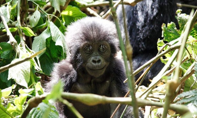 13 Days Rwanda Budget Wildlife & Primates tour