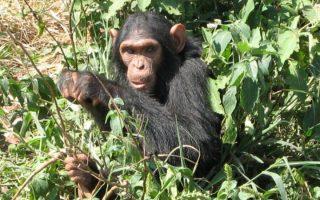 3 Days Nyungwe Chimpanzee Trekking Safari