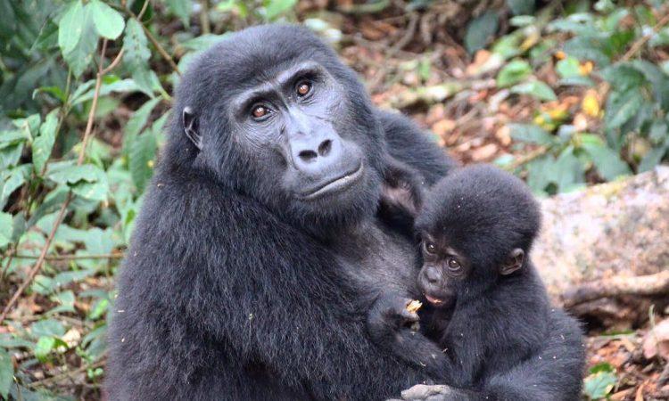7 Days Uganda Adventure Safari