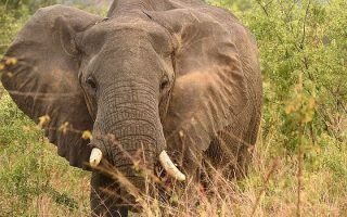 4 Days Semuliki Wildlife Safari