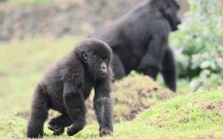 5 Days Rwanda Gorillas & Karisimbi Hike