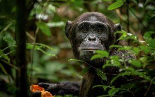 6 Days Uganda Primates & Wildlife Safari