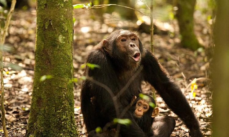 8 Days Rwanda Hiking Safari