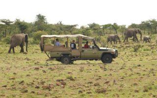 Wildlife Game Drives in Uganda