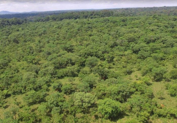 Bugoma forest reserve