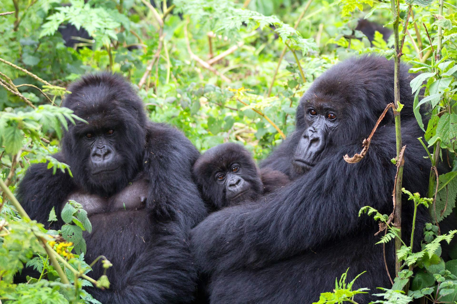 5 Days Ziwa Rhino trekking and Murchison falls park Safari and Bwindi Gorillas