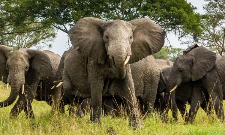 5 Days Queen Elizabeth national park, Semiliki national park and Kibale national Safari