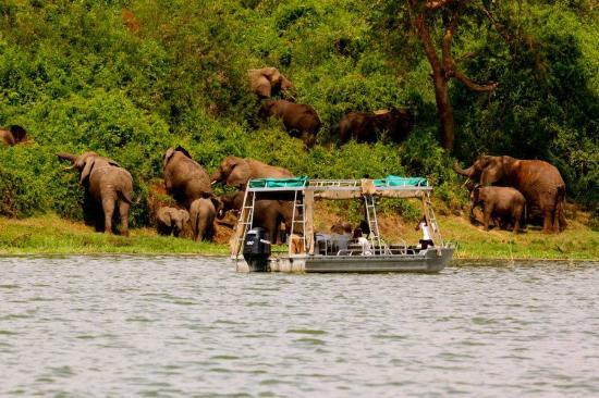 Boat cruise safaris in Uganda national parks