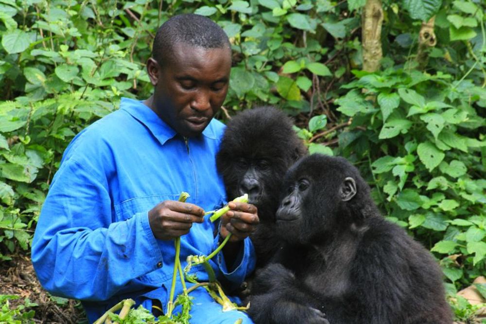 The Senkwekwe gorilla orphanage